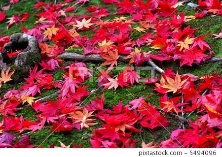산 단풍 Colored leaves, 5494096