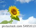 向日葵 太陽花 夏天 5495613