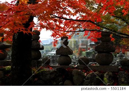 Kyoto Sagano Autumn leaves of Asuka no Nenbutsuji 5501184