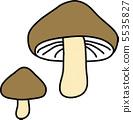 shiitake, shitake, shiitake mushroom 5535827