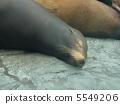 Tweets of animals 5549206