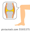 knee, joint, joints 5565375