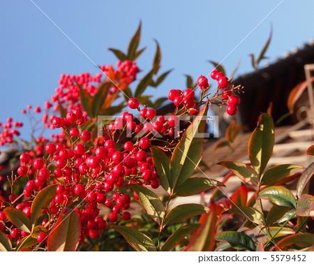 푸른 하늘에 떠있는 붉은 열매 5579452