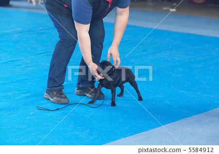 man held head of griffon dog 5584912