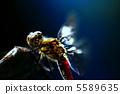 紅蜻蜓 各种红蜻蜓 蜻蜓 5589635