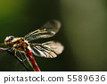 紅蜻蜓 各种红蜻蜓 蜻蜓 5589636