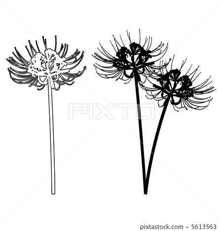 Blank Puzzle Pieces 1141088 likewise Cuties Free Animal Coloring Pages furthermore Tiger Tattoo 8846580 moreover Outline Of Flowers For Drawing Eletragesi Easy Flower Drawing Outline Images besides My Little Pony SKetch Rainbow Dash S Head 335439345. on silhouette drawings