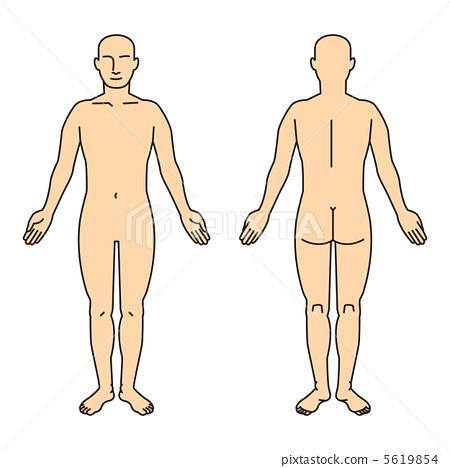 人體的全身圖 5619854