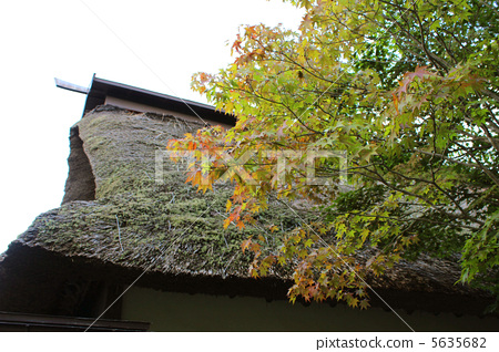 Autumn leaves and a straw roof 5635682