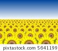 Sunflower field № 1 5641199