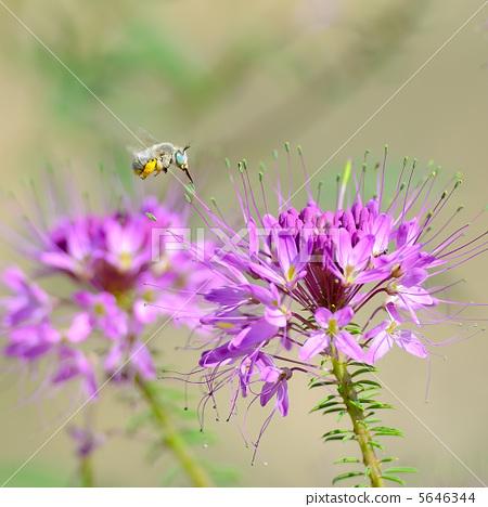 綠眼的蜜蜂 5646344