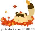 落葉和浣熊 5698800