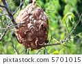 蟲子 漏洞 昆蟲 5701015