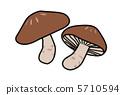 lentinula, shiitake, shiitake mushroom 5710594