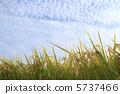 Inaho และท้องฟ้าในฤดูใบไม้ร่วง 5737466
