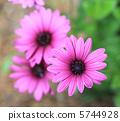 萬壽菊 花朵 花 5744928