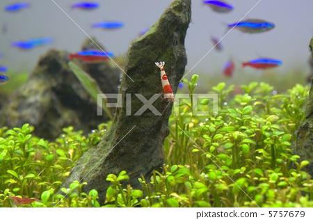 Tropical fish and aquatic aquarium 5757679