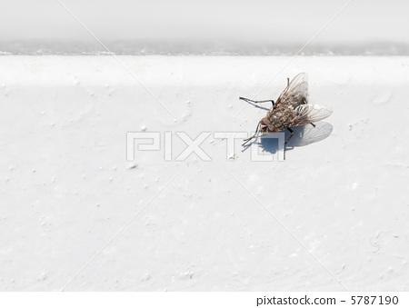 Black fly on white 5787190