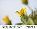 yellow flower, bloom, blossom 5796933