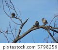gray, starling, branch 5798259
