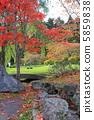 Autumn leaves 5859838