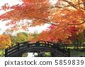 Autumn leaves 5859839