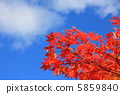 Autumn leaves and sky 5859840