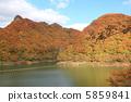 Autumn leaves 5859841