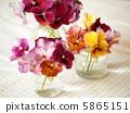 中提琴 插花藝術 花朵 5865151