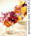 中提琴 插花藝術 花朵 5865152