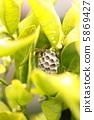 蜜蜂 蜂窩 蜂房 5869427