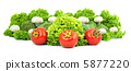 Assorted fresh vegetables 5877220