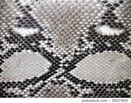 蛇皮材質 5907969