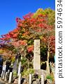 紅葉 楓樹 紅楓 5974634