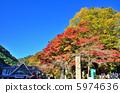 紅葉 楓樹 紅楓 5974636