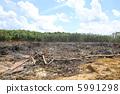 삼림 벌채 5991298