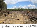 삼림 벌채 5991299