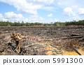 삼림 벌채 5991300