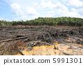삼림 벌채 5991301