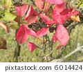 ใบไม้เปลี่ยนสีในฤดูใบไม้ร่วงสวยงามด้วยชื่อนี้ 6014424