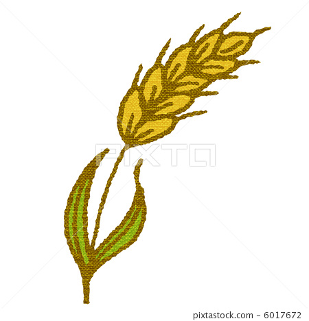 wheat 6017672