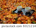 japanese tea, tea, falling leafe 6021214