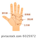 palm reading, the palm of one's hand, palm of the hand 6025972