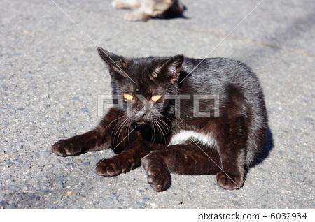 Black cat 6032934