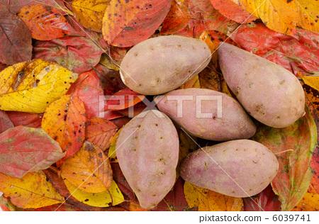 Sweet potatoes on fallen leaves 6039741