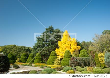 Autumn Botanical Garden 6040175