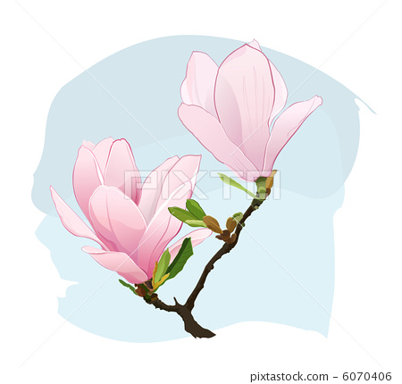 Magnolia Flowers 6070406