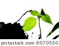 흰색 배경의 나뭇잎 6070550