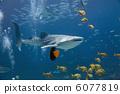 Whale Shark 6077819
