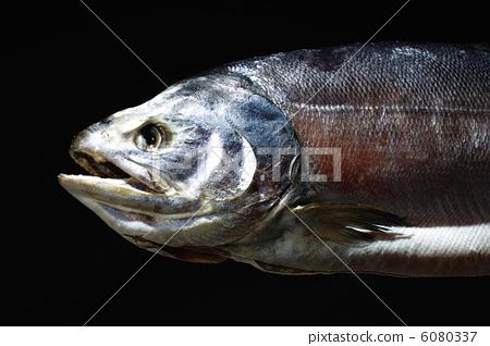 Salami salmon salmon 6080337